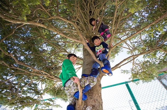 木登りをしている子どもたちの写真